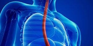 is_150917_esophagus_stomach_intestines_800x600